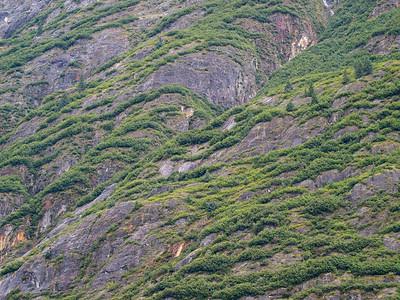 The vegetation near a retreating glacier Copyright 2009 Neil Stahl