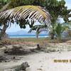 On Palm Island