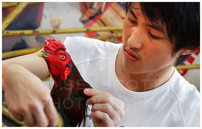 Fighting rooster and his handler,  Bangkok,  Thailand.