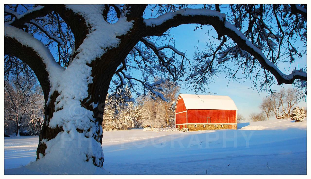 First Snow, Ann Arbor, Michigan.