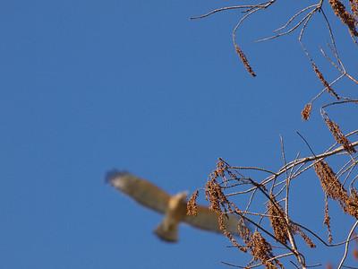 We saw neat hawks.  Copyright 2011 Neil Stahl
