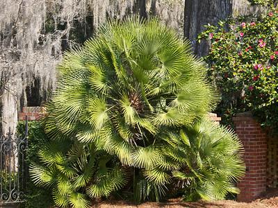 MaClay Gardens  Copyright 2011 Neil Stahl