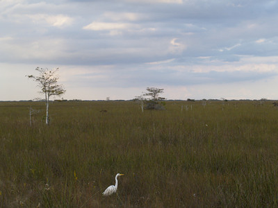 Egret and the Big World
