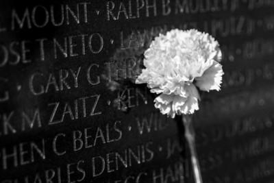 Carnation Along Wall