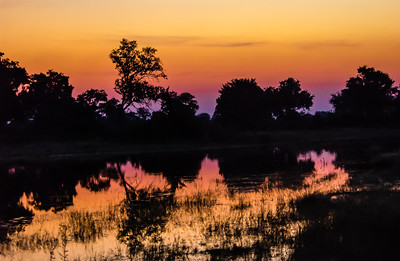 Glorious Okavango Sunset