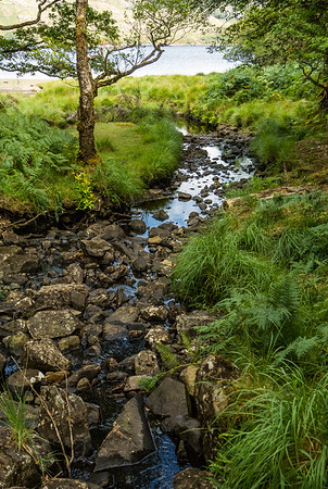 Killarney Stream