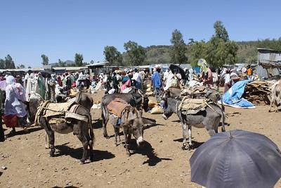 donkeys parked at Axum market
