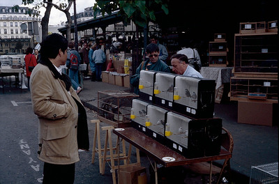 Sunday bird market