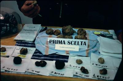 truffles (tartufo)