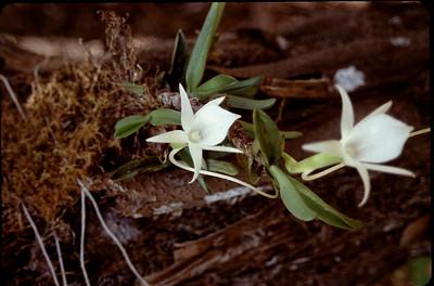 wils orchids
