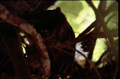 owl in tree top