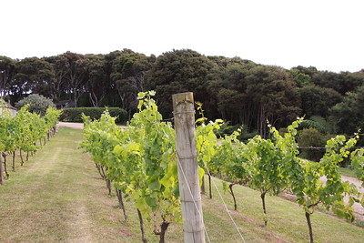 Mudbrick Vineyards