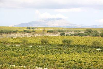 Marsala wine region