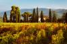 Greve in Chianti; Tuscany, Italy