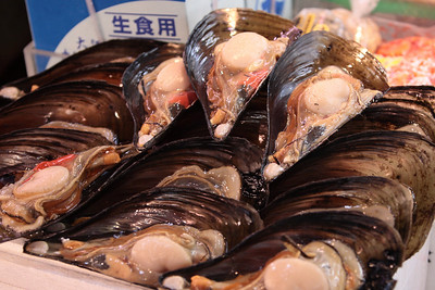 Giant clams at Tsukiji fish market