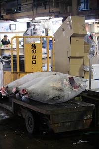 Frozen tuna, Tsukiji fish market, Tokyo