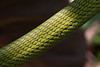 Green Mamba scales