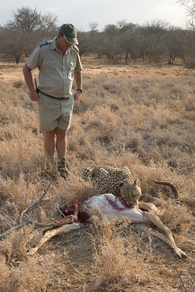Head Ranger Wendel Hough finds Savannah with a fresh Impala kill.