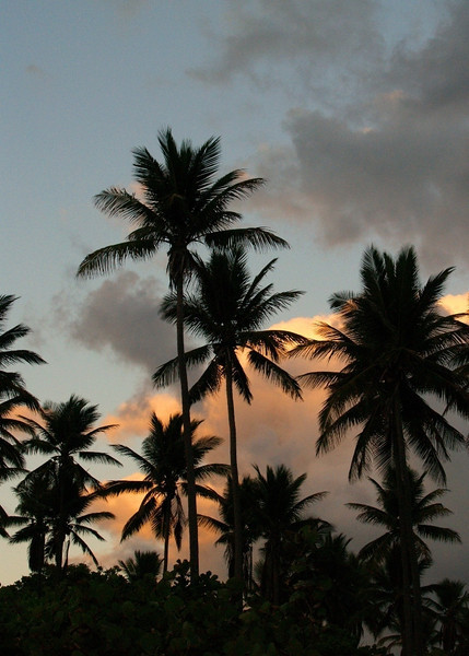 Tropical Palms at Dawn