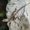 One of many tropical lizards.  Not a gecko which I originally thought.
