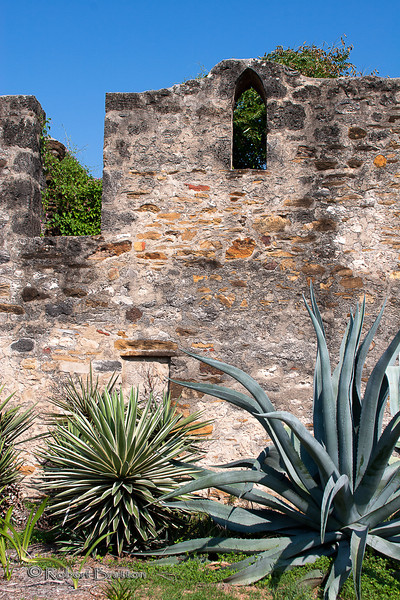 Cactus by the Old Mission Wall, Mission San Jose, San Antonio