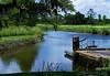 Peaceful Stream, Brookgreen Gardens