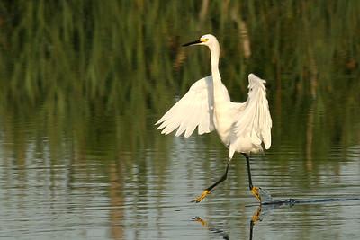 Dancing on Water, Bombay Hook National Wildlife Refuge, Smyrna DE