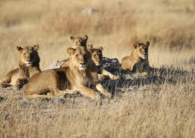 These are the real stars of Hwange National Park