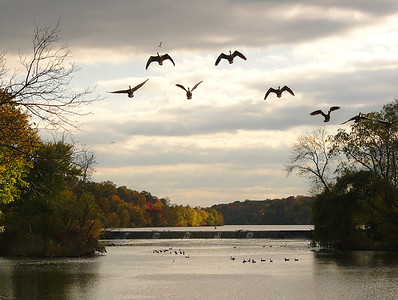 Canadian Geese over Lake Carnegie in Kingston NJ