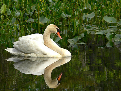 Soft Reflections, Spring Lake in Hamilton NJ