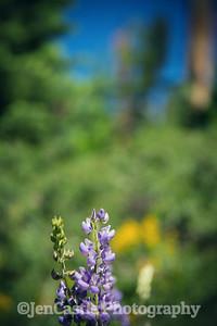 Ostrander Lake, Yosemite, California