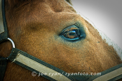 The Clydesdale Eye