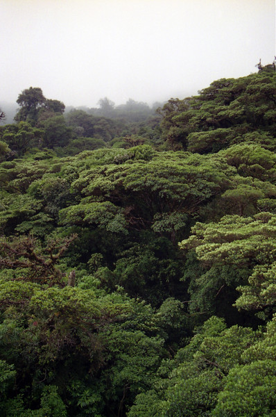 Rainforest canopy<br /> Professional Nature Photography by Christina Craft of the Nature Stock Photography Library