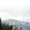 mountain-goat-pictures8234