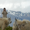 mountain-goat-pictures8235