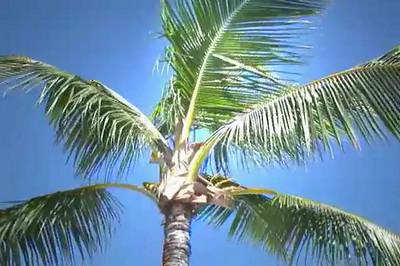 Florida Keys 2007