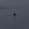 Boat in mist<br /> Local fishing boat heading through fog to sea from Whittier, Alaska, USA