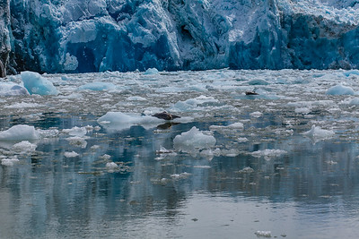 The Sawyer Glacier