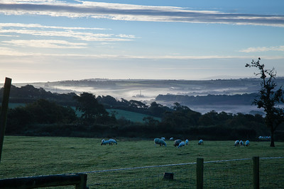 Early morning mist Winscott farm, nr Bideford, Nth Devon, England