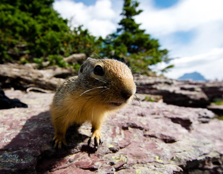 Hello! (a friendly local  of Glacier Park)