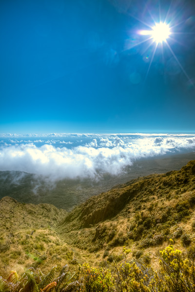 A Walk Above the Clouds in Maui