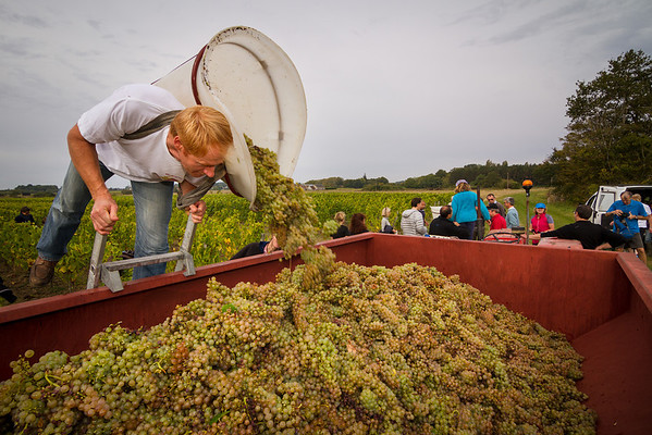 The last pile of grapes goes into the truck.