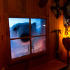 Just a curious evening visitor in a cabin in Spitsbergen, the largest and only populated island of Svalbard. The majority of the population consists of scientists studying polar bears, and the polar bears outnumber the scientists.