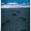 Footprints on Honokalani Black Sand Beach in Maui, Hawaii