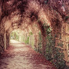 Rustic Arbor in The Queen's Hamlet, Versailles, France