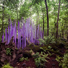 Chihuly in the Woods