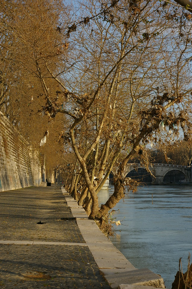 Banks of River Tiber, Rome, with debris from the flood.