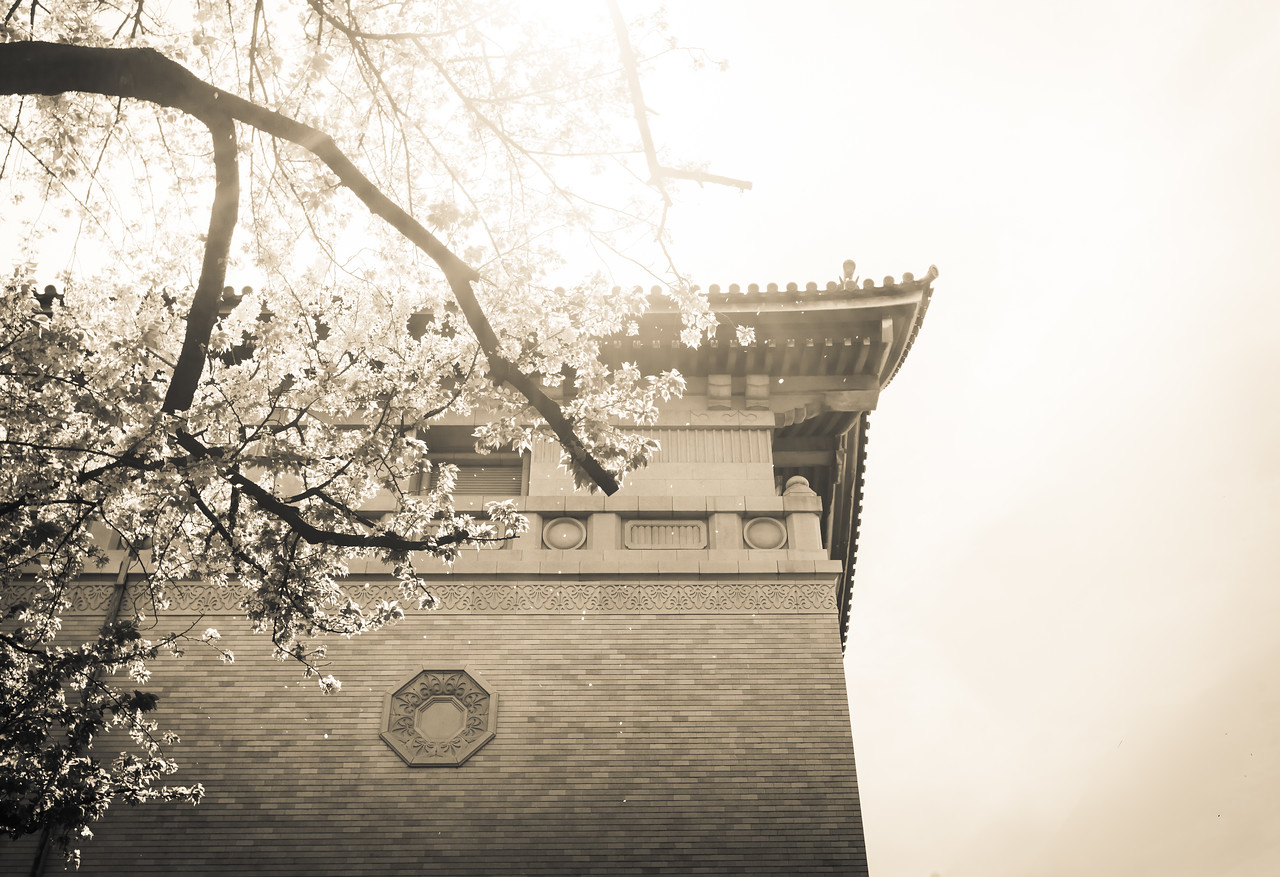 The Ethereal Essence of Sakura
