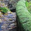 Portland Path