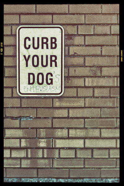 Curb Your Dog's Enthusiasm